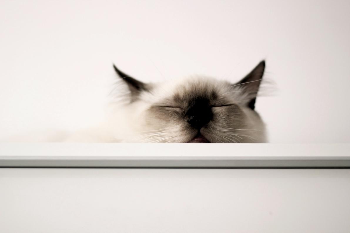 Najnowsze 5 rzeczy, które musisz zrobić zanim kupisz kota z hodowli KJ73